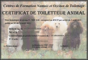 Certificat Toiletteur Animal 001